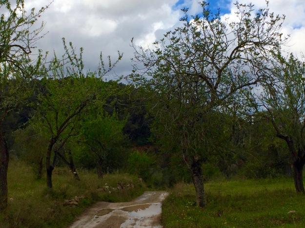 Spazierweg in der Nähe von San Miguel