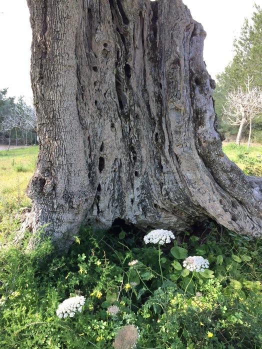 Einen alten Baum verpflanzt man nicht.