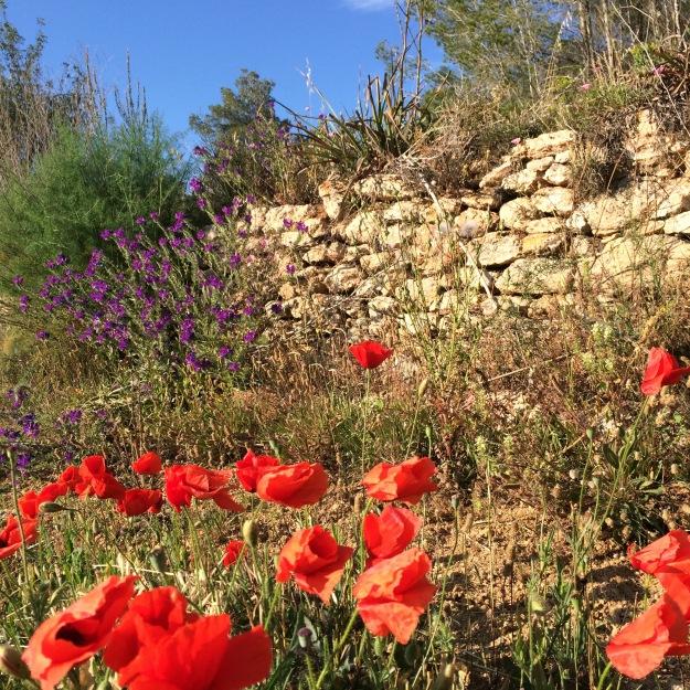 üppige Blütenpracht auf Ibiza im Winter