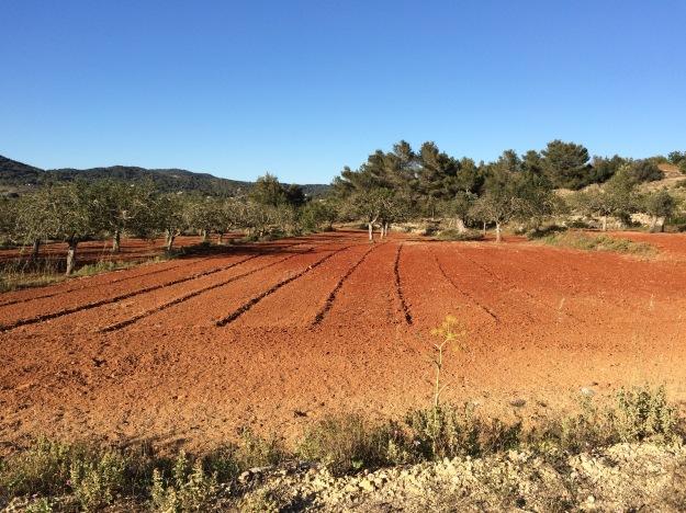 Die rote Erde: typisch Ibiza