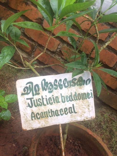 Das passende Heilkraut aus dem Garten