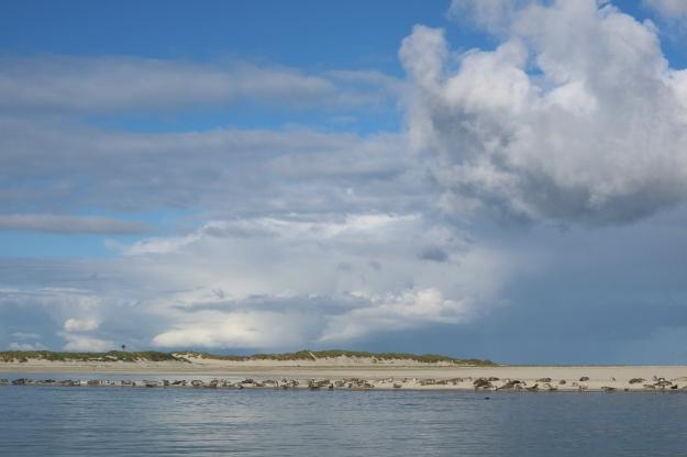 Robben auf einer Sandbank vor Spiekeroog