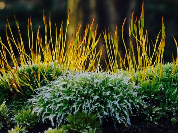 Mikrokosmos im Wald
