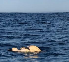 Sex un the Sea, Schildkröten beim Liebe machen