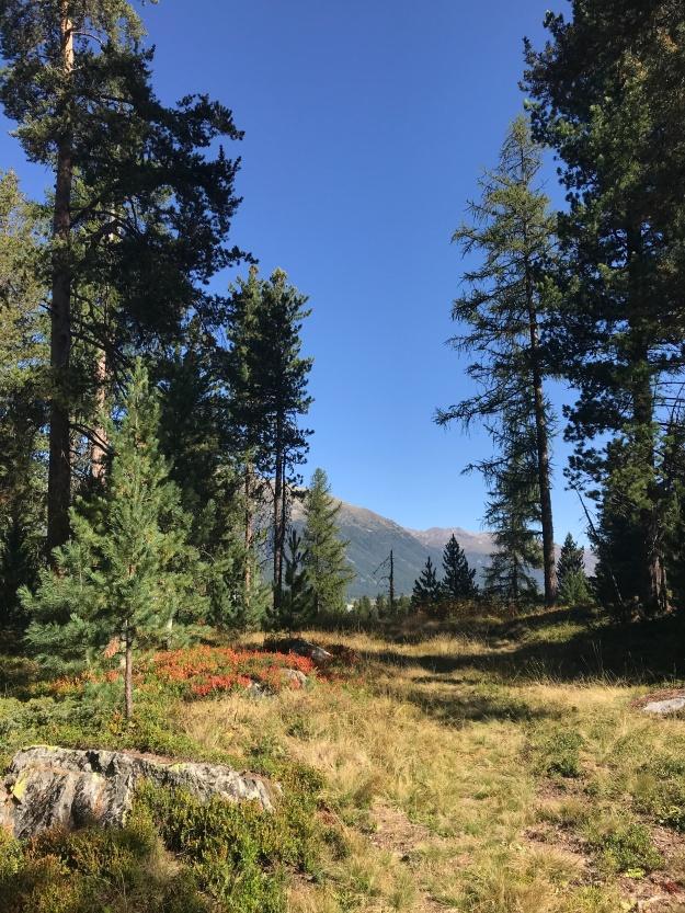 Spazier-und Wanderpfade rund um Celerina